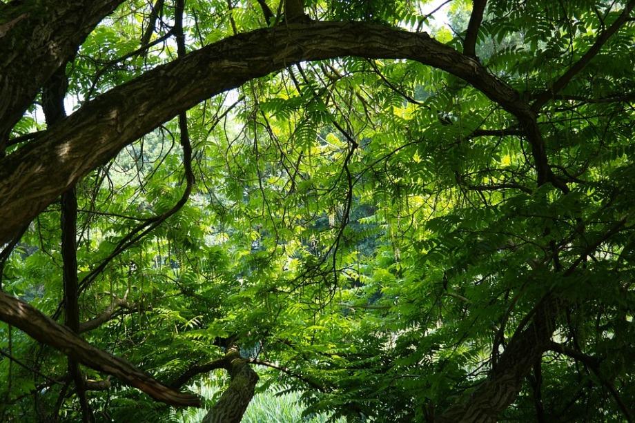 tree-141692_960_720
