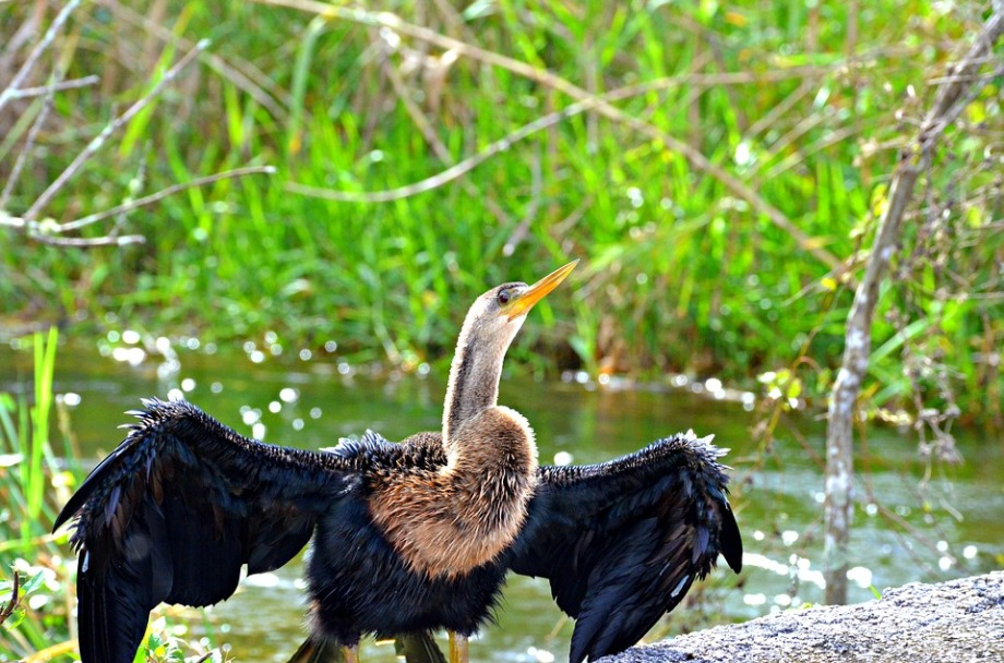 vulture-1120200_960_720