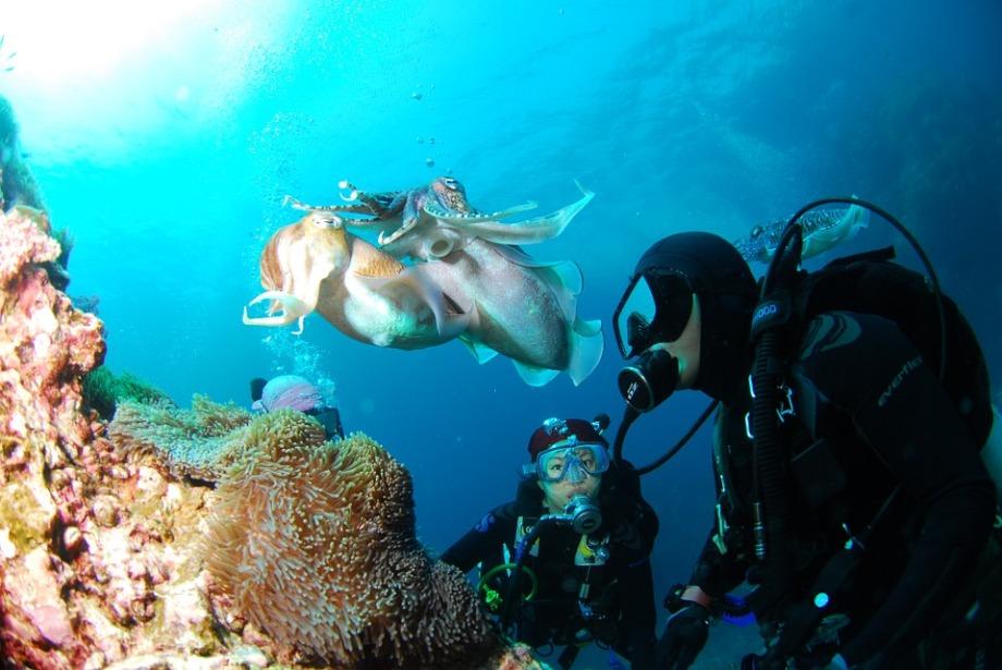 diving-689831_960_720